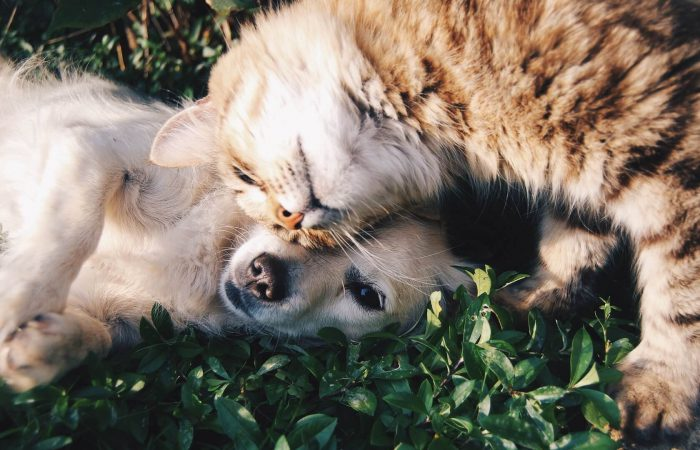 Tips for Boarding your Cat or Dog